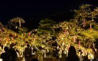 夏のイベント☆ 【京都 イオンモール久御山店 マツエク】